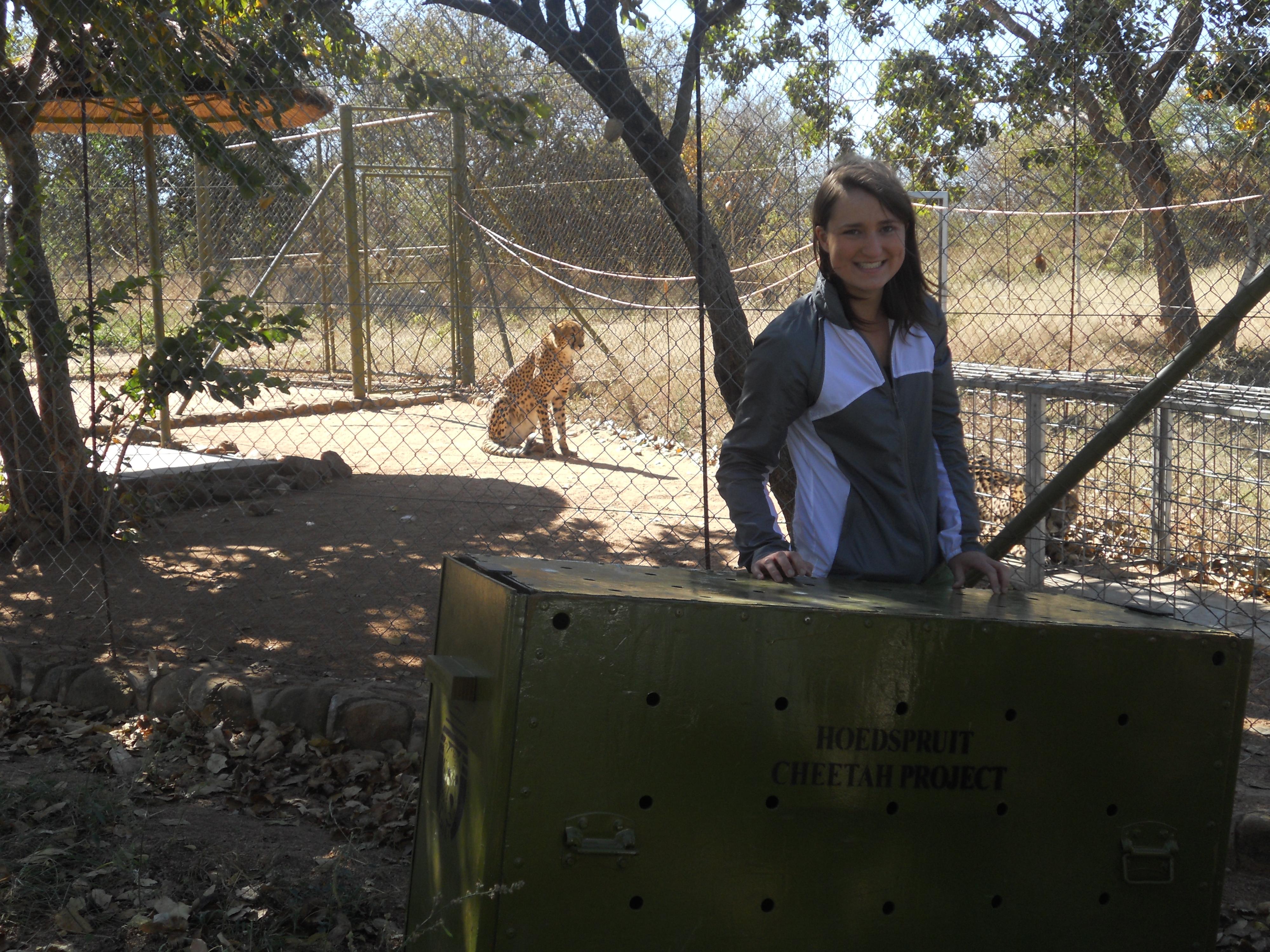 hoedspruit volunteer with cheetah