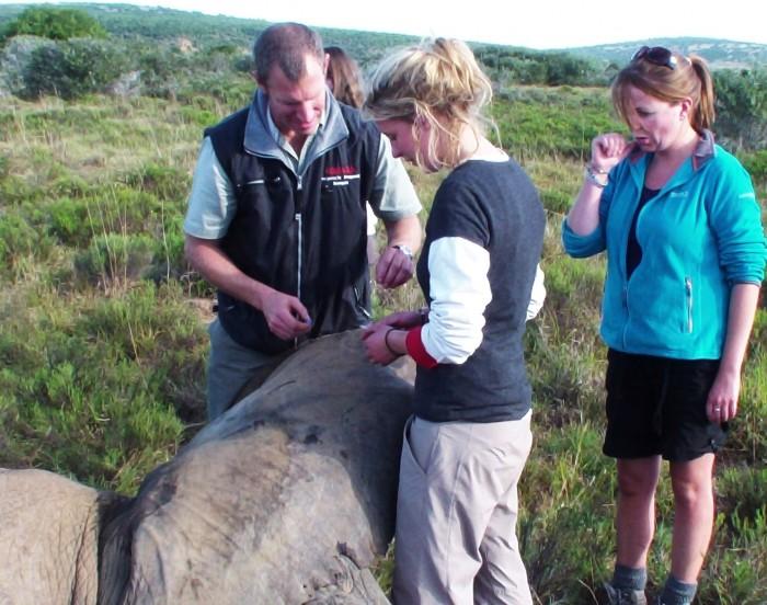 volunteer treating a poorly elephant