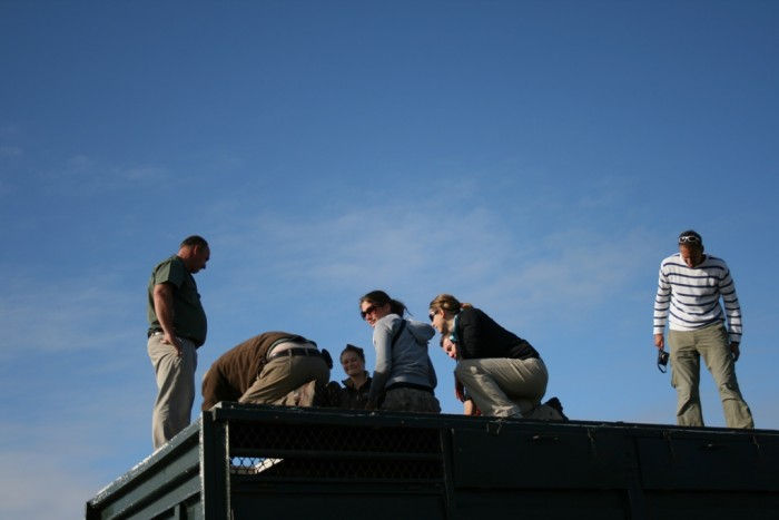 volunteers stand atop an animal transportation vehicle on the shamwari conservation experience