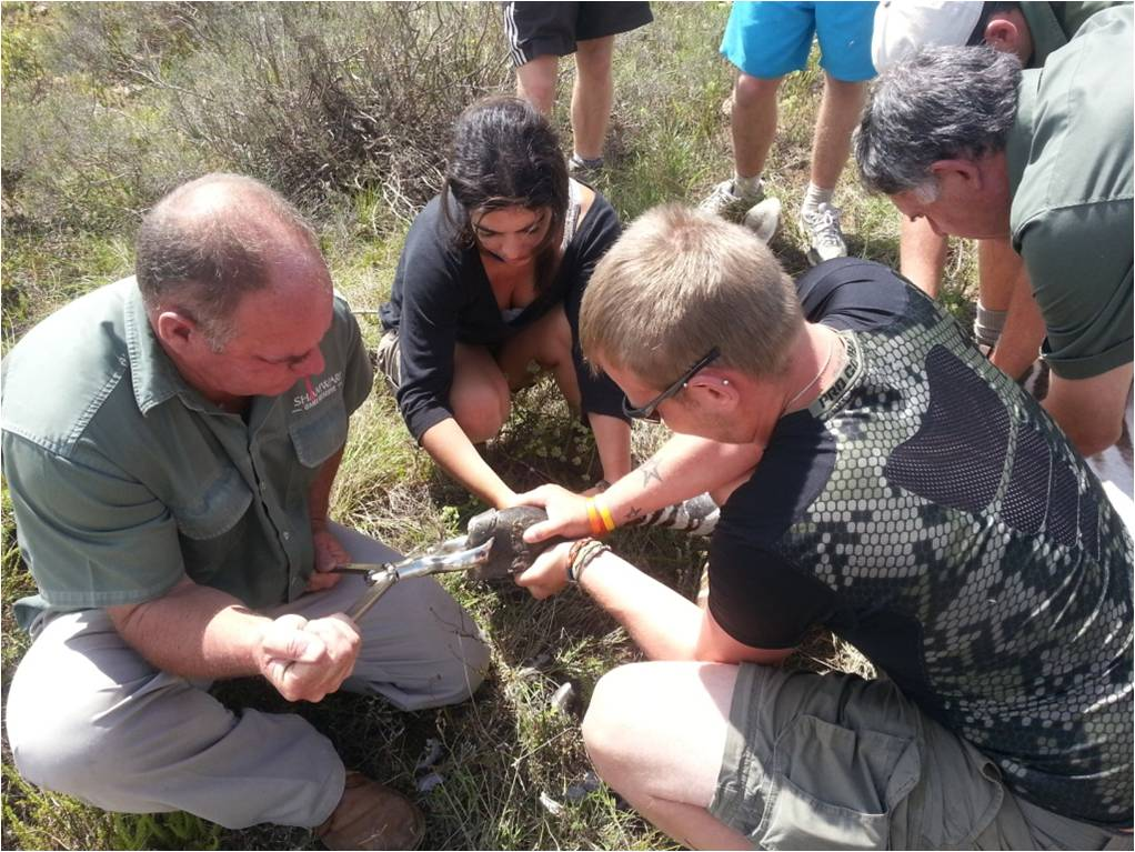 The vet and volunteers working together to treat the zebra's disruptive hoof