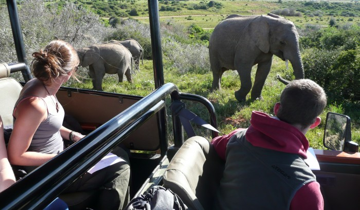 Volunteers watch on as elephants approach their jeep