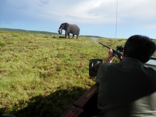 One of the vets at the Shamwari Conservation Experience darts an elephant so its fertility can be tested