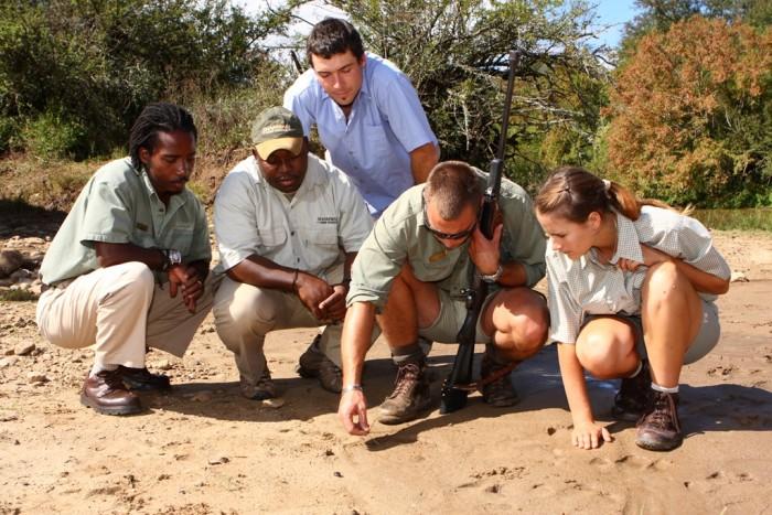Wildlife rangers show volunteers how to track wildlife