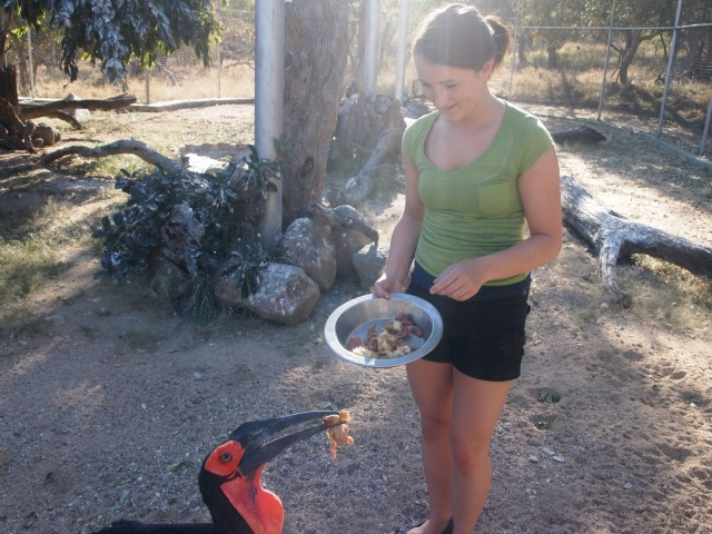 A volunteer feeding one of South Africa's many beautiful birds