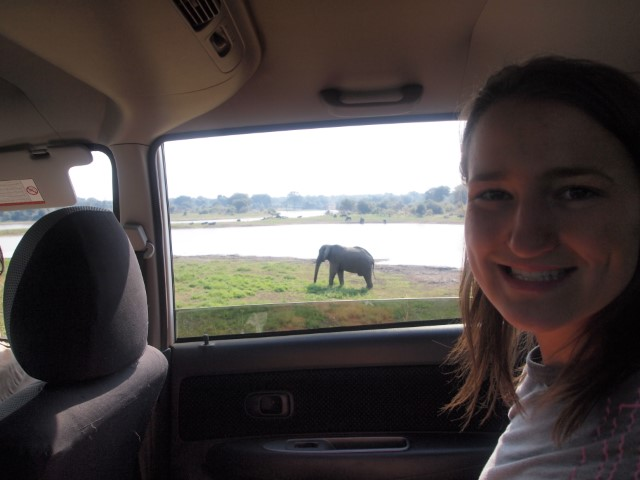 Amber, a volunteer, with an elephant metres away