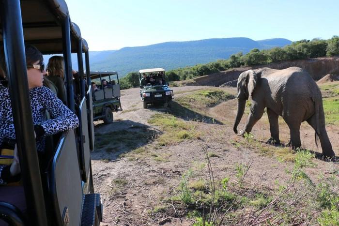 elephants-2-sgs
