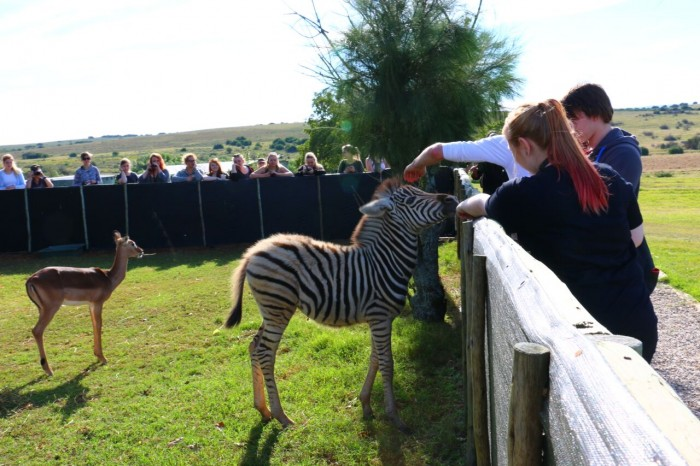 SGS college students meet some of the patients at the Shamwari Game Reserve's rehab centre
