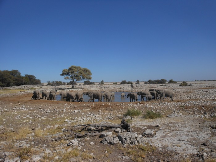 A group of elephants enjoying refreshments at a watering hole