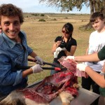 Volunteers carrying out a post mortem on a wild animal