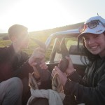 Two volunteerers blindfold a hartebeest