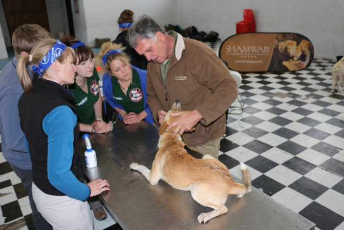 A dog is looked at by volunteers and Shamwari vets