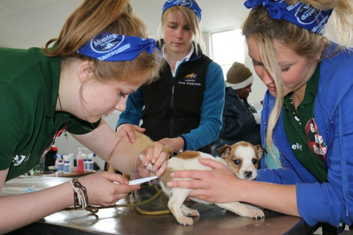A small puppy gets treated by the veterinary volunteers