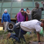 Volunteers watch on as a Shamwari vet treats an animal