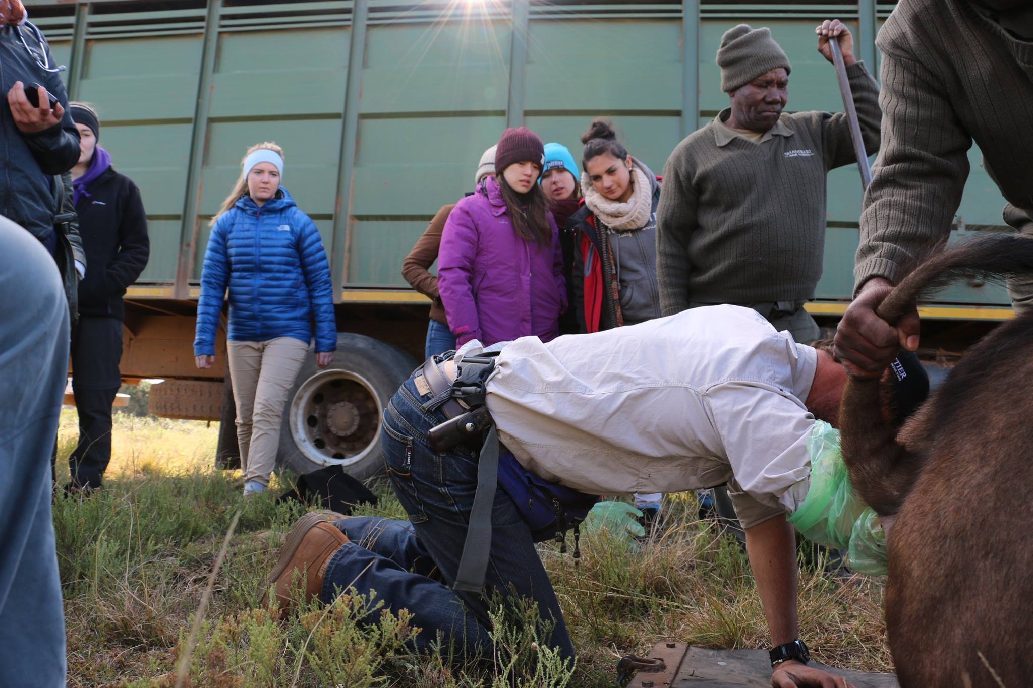 Volunteers watch on as a Shamwari vet treats an animal