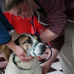 A veterinary student treats a poorly dog