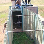 Volunteers release a buffalo into it's enclosure at the Shamwari Conservation Experience