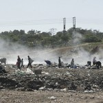 People and animals rummage through a dump