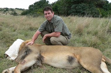 Amakhala vet with a blindfolded lion