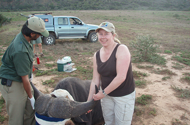 A Gap Africa volunteer posing with a buffalo