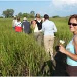 volunteers trek through the overgrowth