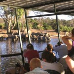 Travellers watch on as a herd of elephants congregate around a river