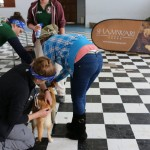 Veterinary students work to treat a dog