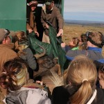 volunteers and vets help to move a buffalo onto the Shamwari truck