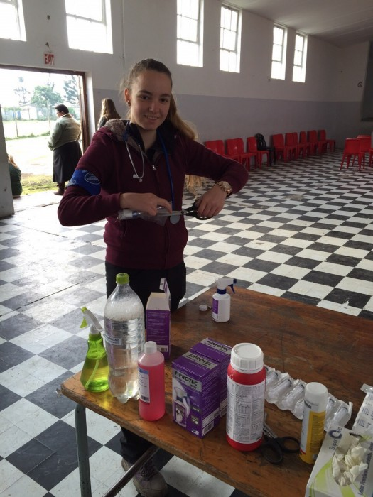 """A """"Pre"""" Vet Eco Experience volunteer prepares medication for local's pet cats and dogs"""