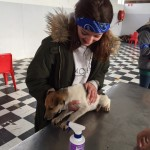 """Pre"" Vet Eco Experience volunteer holding a small dog from a local village"