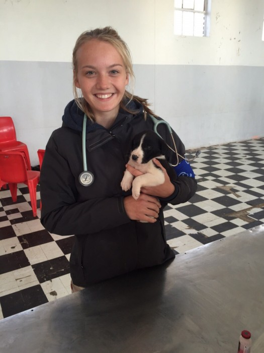 "One of our ""Pre"" Vet Eco Experience volunteers holding a puppy"