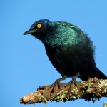 A beautiful green bird