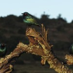 A group of beautiful green birds sit on top a tree branch