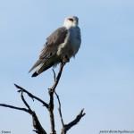 A bird sits atop a high a branch