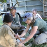 A volunteer works to treat an animal whilst other vets look on