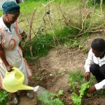 Local members of the community watering their vegetation