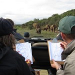 Volunteers sketch an elephant herd, including a baby