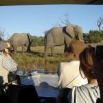 Okavango&ChobeTrailSouth1