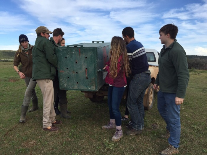 """Pre"" Vet Eco Experience volunteers move a cheetah"