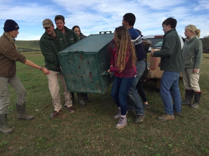 """Pre"" Vet Eco Experience volunteers move a cheetah"