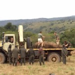 """Pre"" Vet Eco Experience students and vets relocate a rhino"