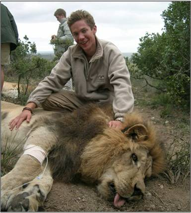 A volunteer at the Shamwari Conservation Experience with a sedated lion