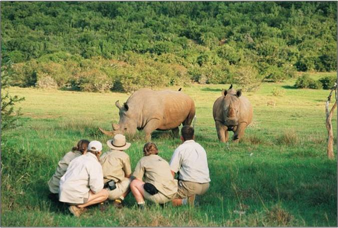 Vets and volunteers monitor rhinos from nearby