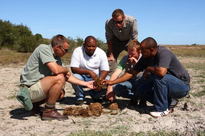 Game rangers and volunteers examining dung