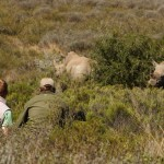 A game ranger and volunteer monitor rhino in South Africa