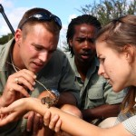Game rangers and volunteers monitor a frog on a volunteers arm