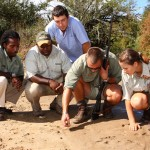 Game rangers and volunteers examine prints in the ground