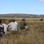 Game rangers and volunteers monitor elephants