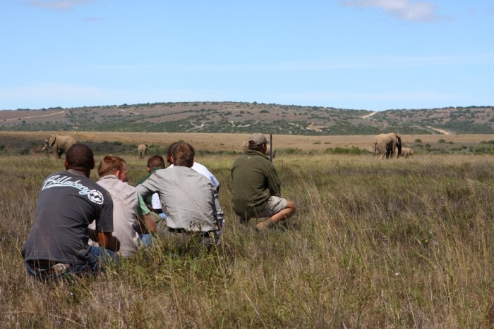 Game rangers and volunteers monitor elephants