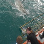 Volunteers watch on as a shark takes some bait