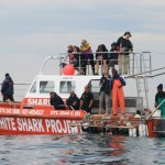 Volunteers aboard a shark boat watch on as their peers get dunked under the water in a shark cage
